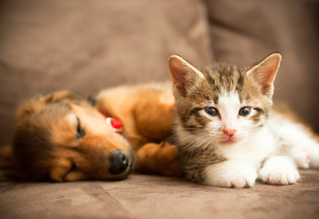 picayune puppy, kitten care